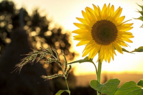 3 ideeën voor je tuin