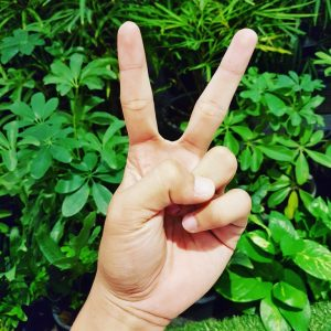 Geen groene vingers? Kies voor kunstplanten