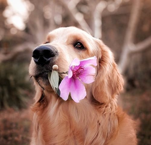 Tips voor een hondvriendelijke tuin